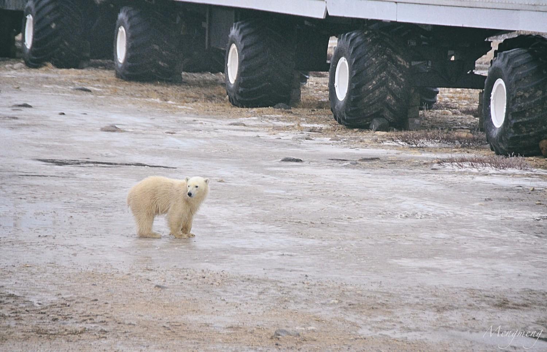 失去母亲的孤儿小熊.jpg