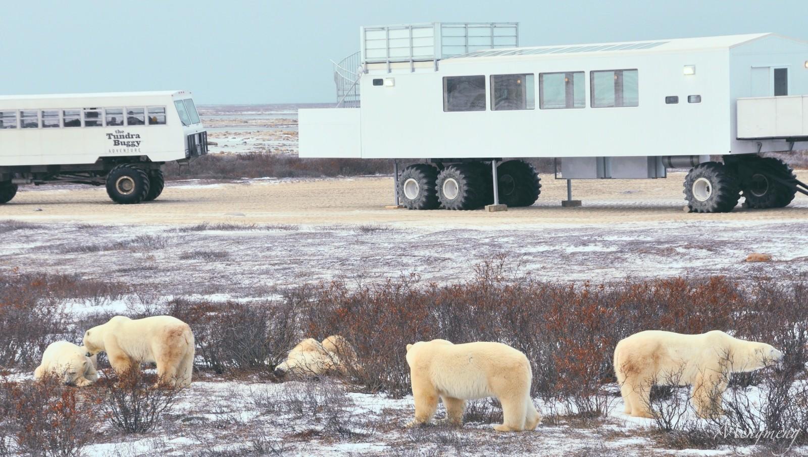 北极熊聚会二.jpg